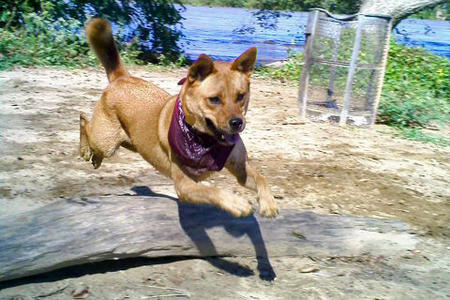 Wiley the Mixed Breed Pictures 747629