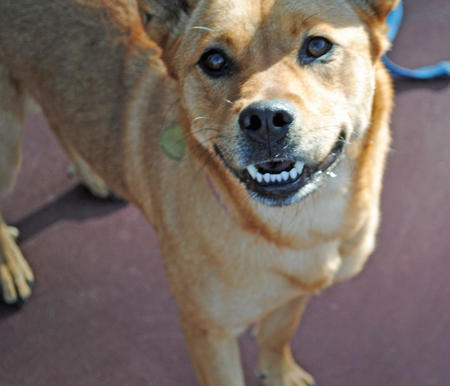 Wiley the Mixed Breed Pictures 747631