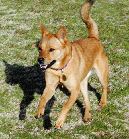 Wiley the Mixed Breed Pictures 747632