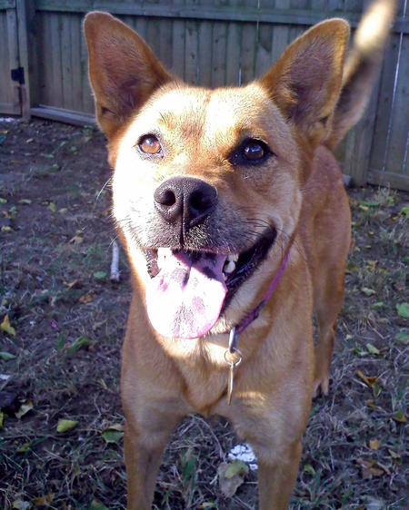 Wiley the Mixed Breed Pictures 747628