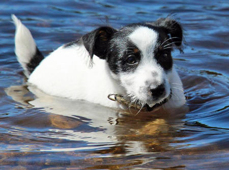 William the Jack Russell Terrier Pictures 1034763