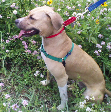 Willow the Mixed Breed Pictures 652459