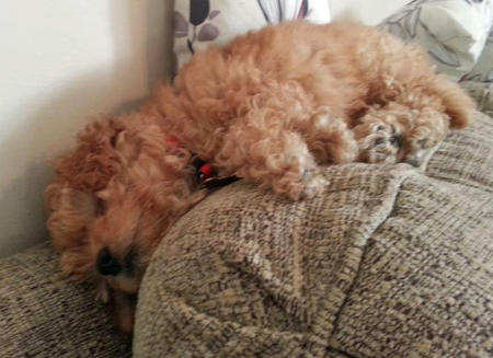 Winnie the Poodle Pictures 993331