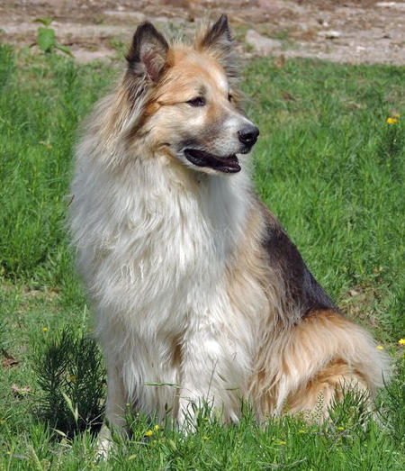 Wrangler the Collie Mix Pictures 1000374