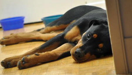 Yuna the Rottweiler Pictures 713922