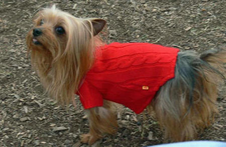 Zoe the Yorkshire Terrier Pictures 755721
