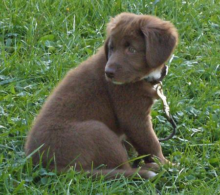 Charlie the Labrador Retriever Mix Pictures 137292