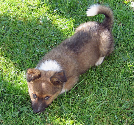 Scooby the Mixed Breed Pictures 127711