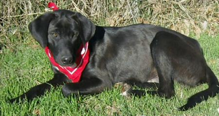 Troy the Adoptable Grown-Up Puppy Pictures 166386