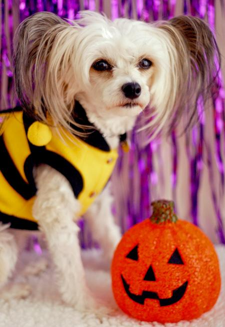 Happy Howl-a-ween Grown-Up Puppies Pictures 150943