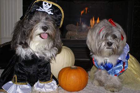 Happy Howl-a-ween Grown-Up Puppies Pictures 150940