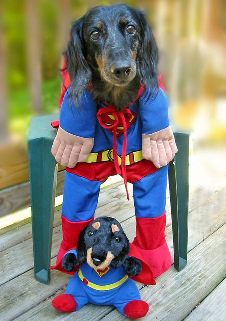 Happy Howl-a-ween Grown-Up Puppies Pictures 150939