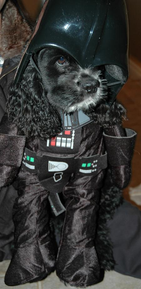 Happy Howl-a-ween Puppies Pictures 150967