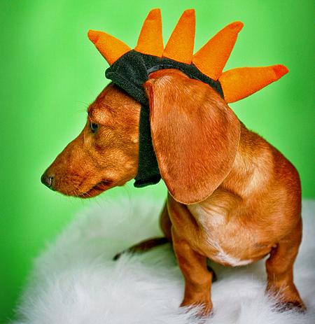 Happy Howl-a-ween Puppies Pictures 150960