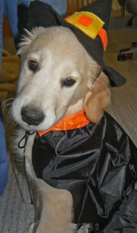 Happy Howl-a-ween Puppies Pictures 150959