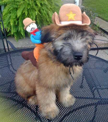 Happy Howl-a-ween Puppies Pictures 150956