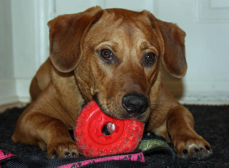 Jake the Mixed Breed Pictures 187400