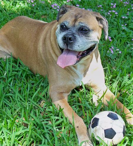Miller the Boxer Pictures 178106