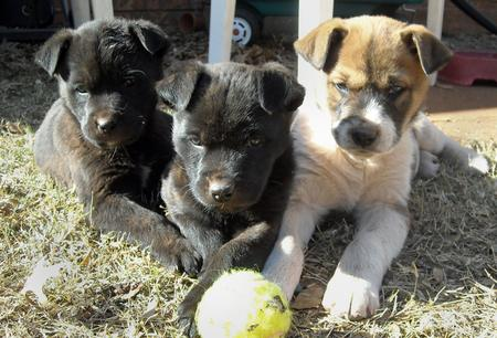 Five Adoptable Puppies Pictures 182868
