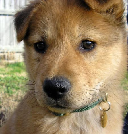 Lyra the Mixed Breed Pictures 188127