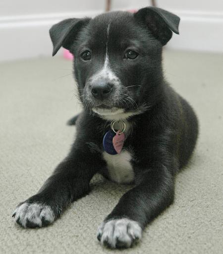 Lucy the Mixed Breed Pictures 197524