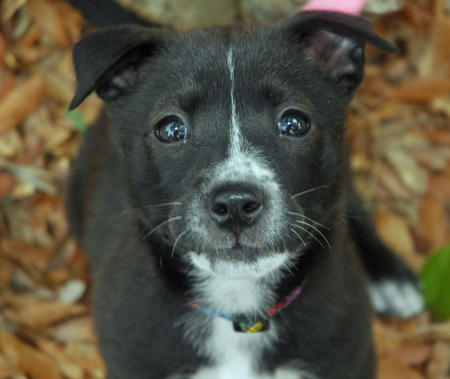 Lucy the Mixed Breed Pictures 197518