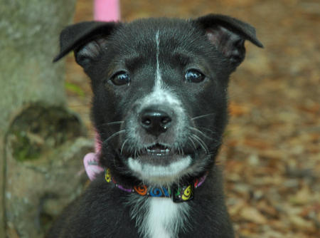 Lucy the Mixed Breed Pictures 197517