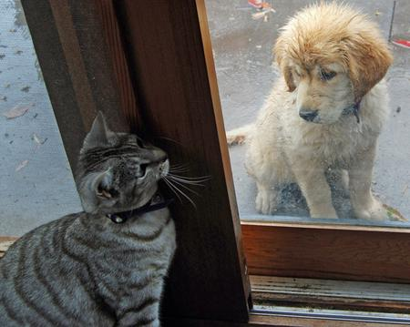 Beatrix the Golden Retriever Pictures 199113