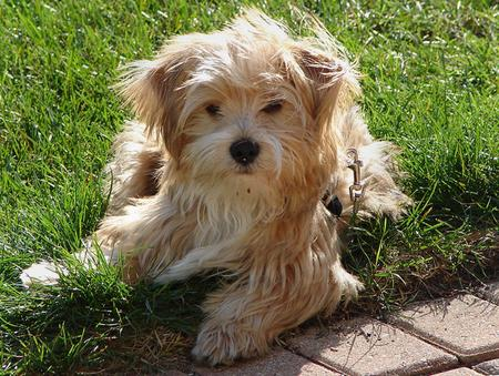 Rocky the Yorkie Mix Pictures 208260
