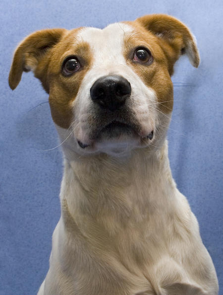 Paddy the Adoptable Grown-Up Puppy Pictures 214856