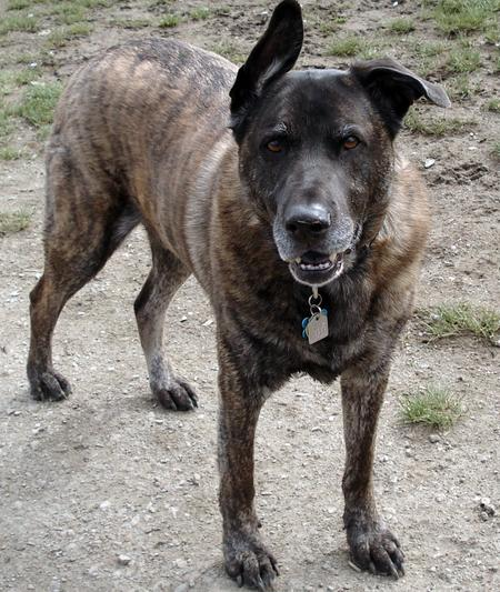 Ace the Mixed Breed Pictures 194244