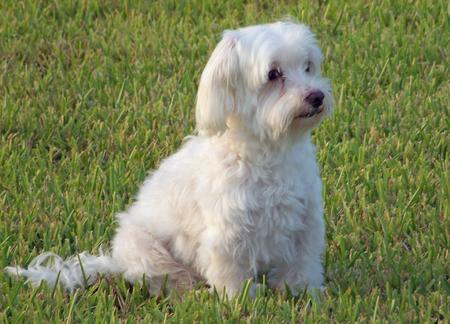Agador the Maltese Pictures 230520