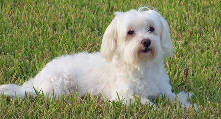 Agador the Maltese Pictures 230519