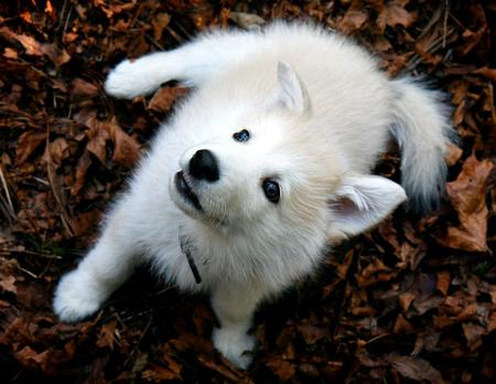http://cdn-www.dailypuppy.com/media/dogs/anonymous/1894/2008040814321_Ari_AlaskanMalamute3.jpg_w450.jpg