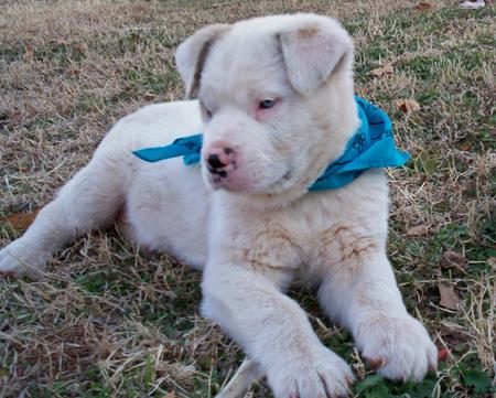 Angel the Adoptable Puppy Pictures 252049