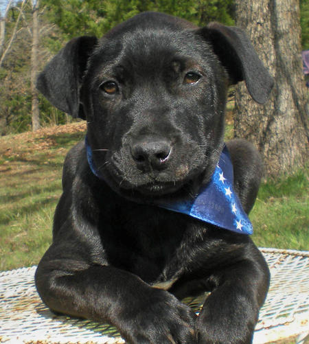 Elvis the Adoptable Puppy Pictures 301637