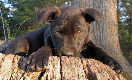 Elvis the Adoptable Puppy Pictures 301635
