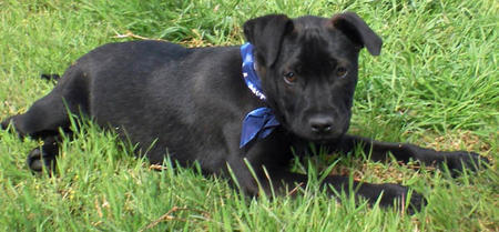 Elvis the Adoptable Puppy Pictures 301636