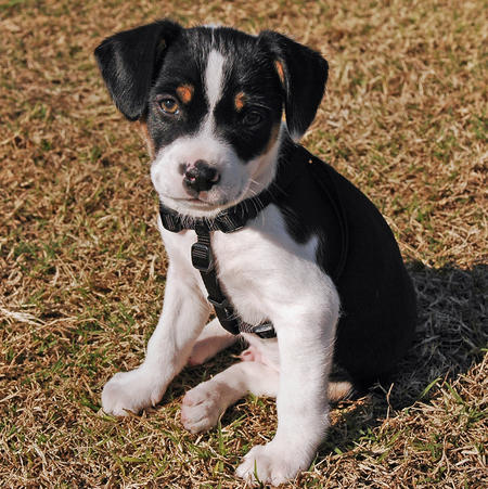 Bobo the Mixed Breed Pictures 256620