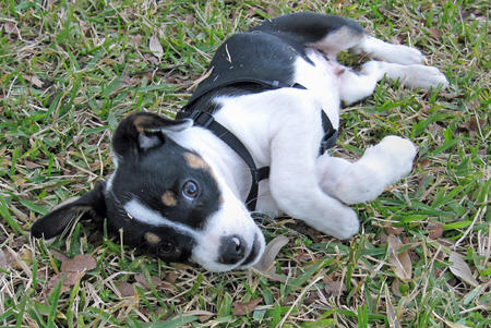 Bobo the Mixed Breed Pictures 256624