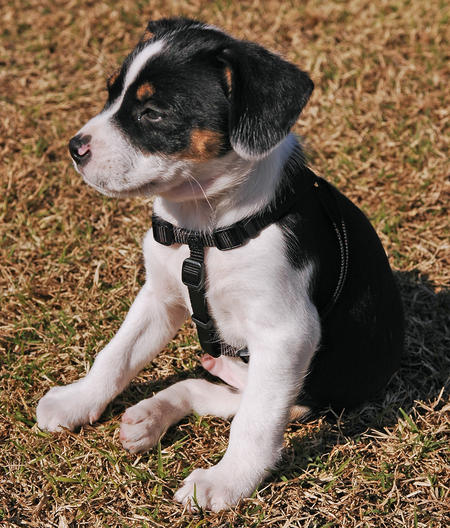 Bobo the Mixed Breed Pictures 256628