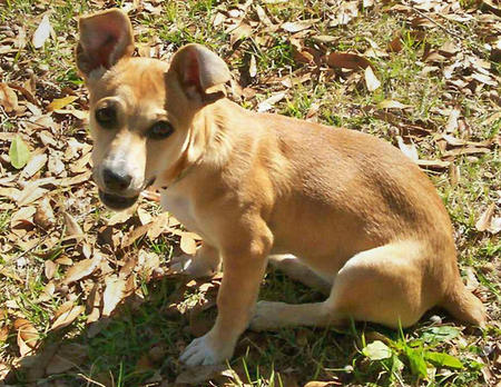 Lady the Dachshund Mix Pictures 341690