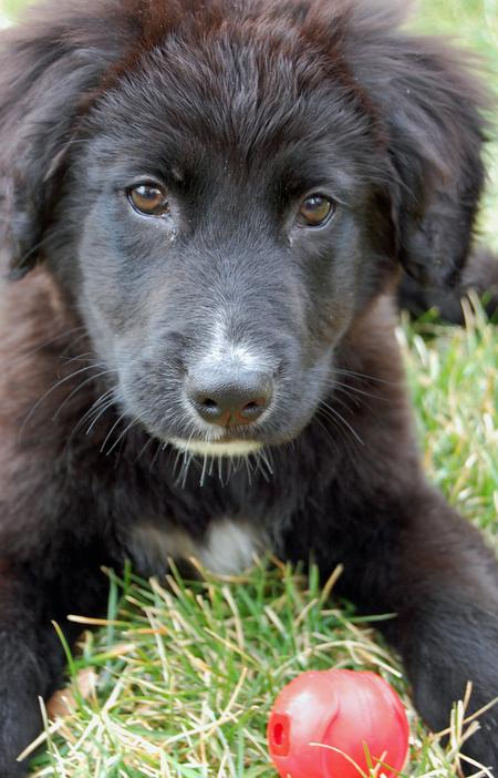 Elway the Border Collie Mix | Puppies | Daily Puppy