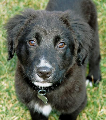 Elway the Border Collie Mix Pictures 264988