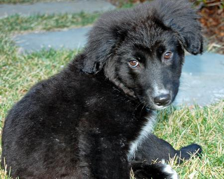 Elway the Border Collie Mix Pictures 264986