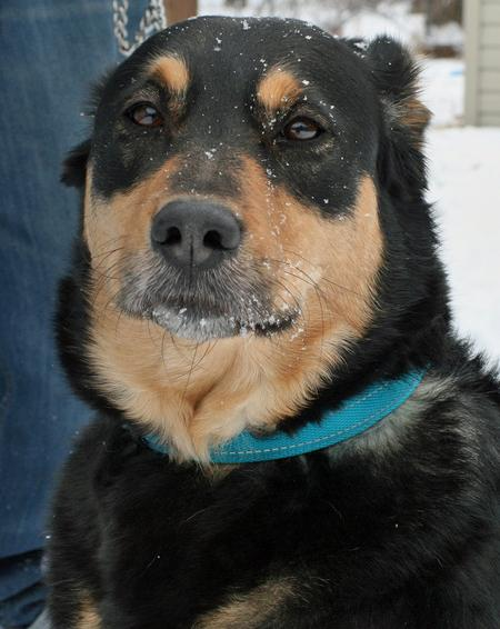 Diamond the Rottweiler Mix Pictures 265166