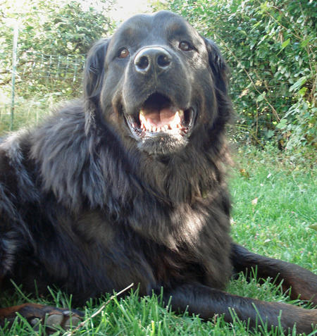 Shadow the Mixed Breed Pictures 346795