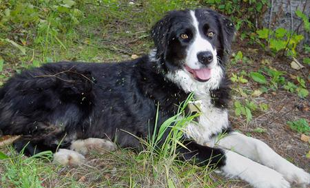 Tippy the Border Collie Mix Pictures 272884