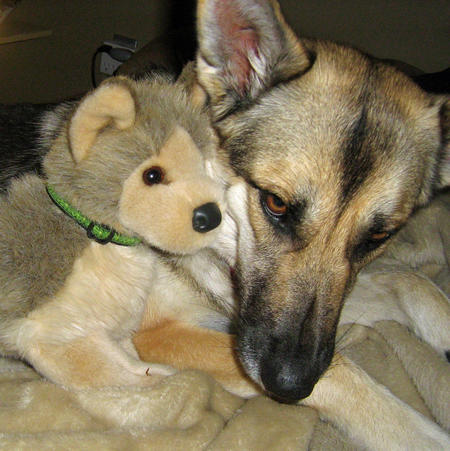 Sasha the German Shepherd Mix Pictures 281650