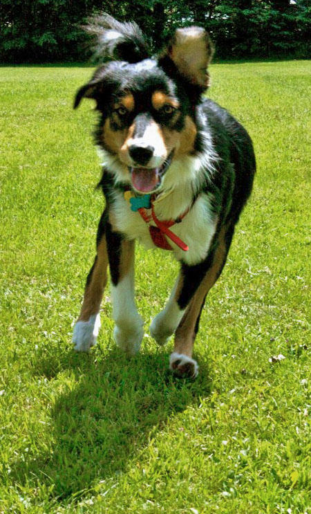 Anders the Bernese Mountain Dog Mix Pictures 381641